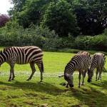 El Zoológico de Dublín