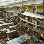 El Museo de Historia Natural, ideal para niños